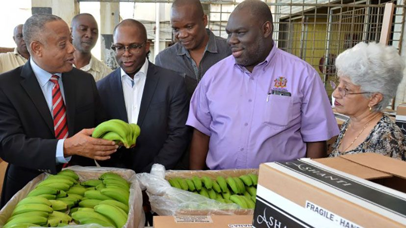 Minister of Agriculture, Labour and Social Security, Hon. Derrick Kellier (left), examines banana being packaged for export, while on a visit to the Agricultural Marketing Corporation (AMC) Complex in Kingston on Friday (January 23). Others (from lef