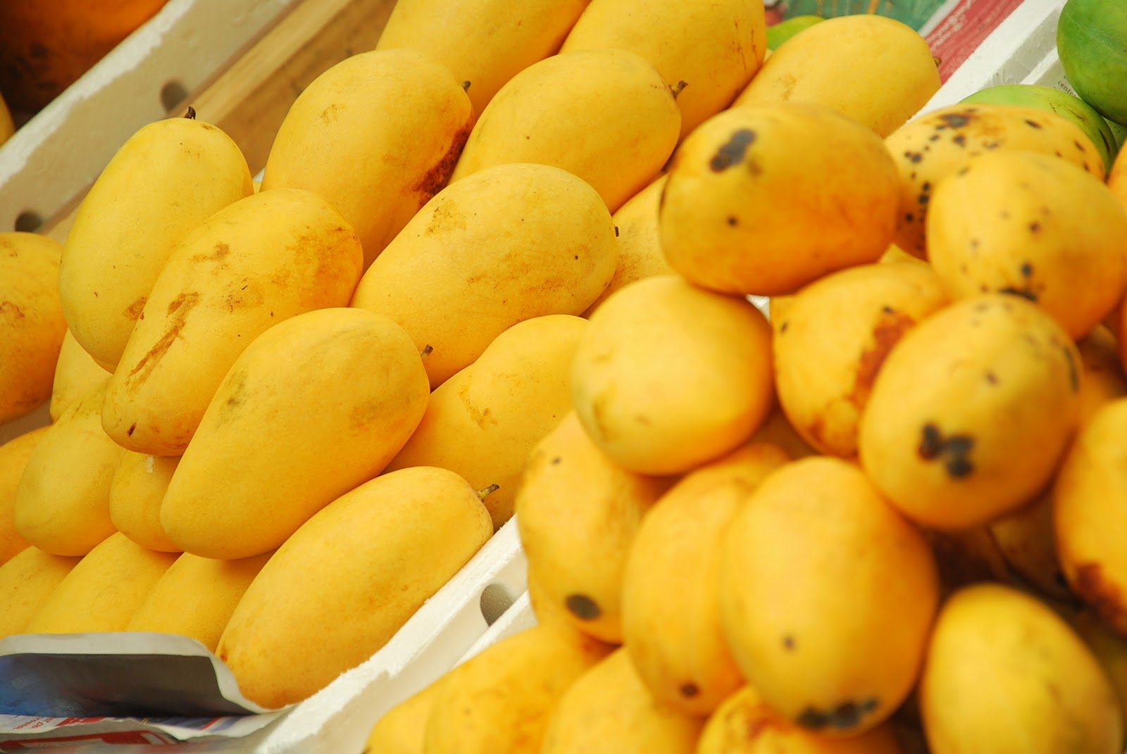 Mangoes for export