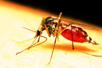 'Don't panic' – CTO, CHTA compiles FAQs on zika, travel to Caribbean