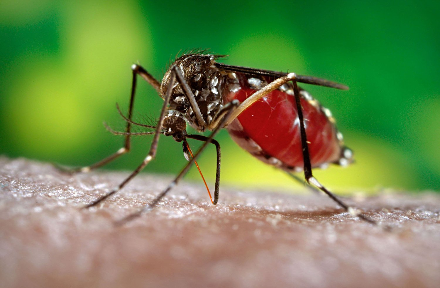 persuasive speech prevent aedes mosquito Ah, mosquitoes, the insects that are universally hated the world over these pesky, disease-carrying pests make a living by sucking the blood out of just about anything that moves, including us but take a moment to look at things from the mosquito's perspective mosquitoes are actually interesting.