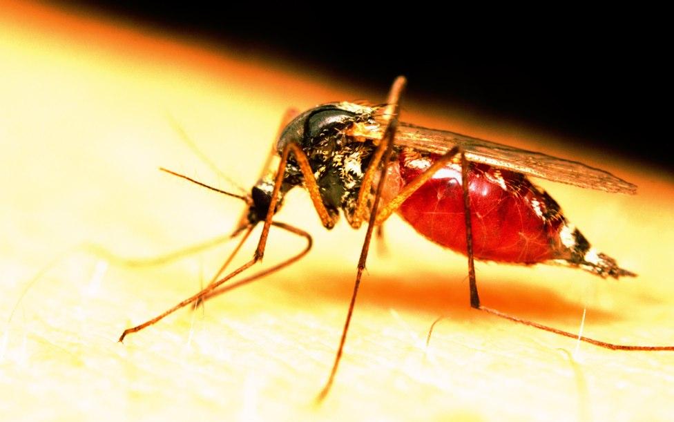 Zika-mosquito