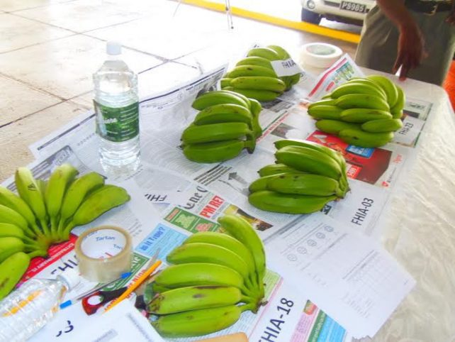 The new varieties on display on Friday morning (Photo via Dominica News Online)