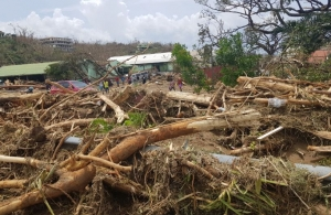 Downed trees in Dominica