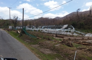 What is left of a greenhouse in Dominica