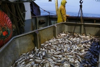Caribbean fish stocks dwindling as illegal fishing intensifies
