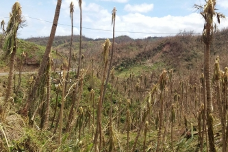 Barren landscape after Hurricane Maria struck Dominica