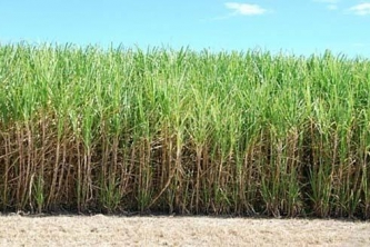 CDB grant to help CARICOM Investigate suitability of plantation white sugar for Regional manufacturing
