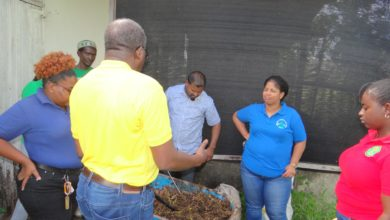 Photo of Creating Economic Opportunities for Organic Waste Management Sectors