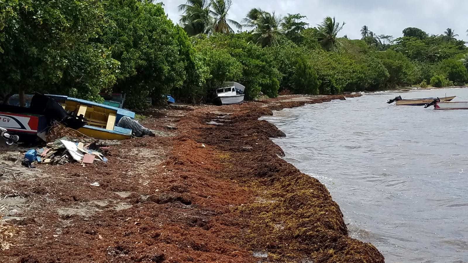 Photo of After record Sargassum influx, CRFM initiates fact-finding study in CARICOM States