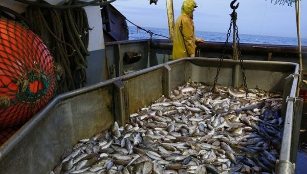 Photo of Caribbean fish stocks dwindling as illegal fishing intensifies