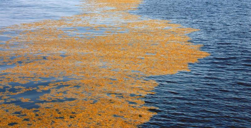 Photo of Sargassum project presents at the Smithsonian
