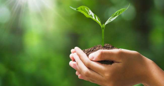 Today is World Environment Day - CARICOM