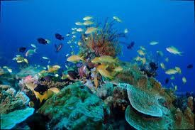 """Photo of SHAPING A POST-2020 GLOBAL BIODIVERSITY FRAMEWORK – """"Innovation for a Sustainable Ocean in the Caribbean"""""""
