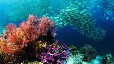 Photo of Observing World Oceans Day, June 8th 2021: CARICOM Secretariat