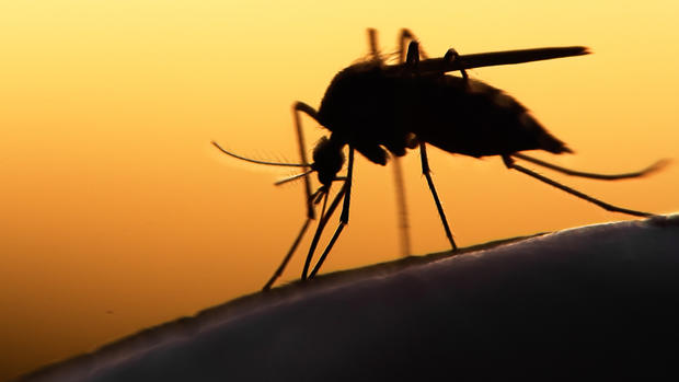 Photo of UWI Regional Task Force on Zika tracks rare neurological disorder